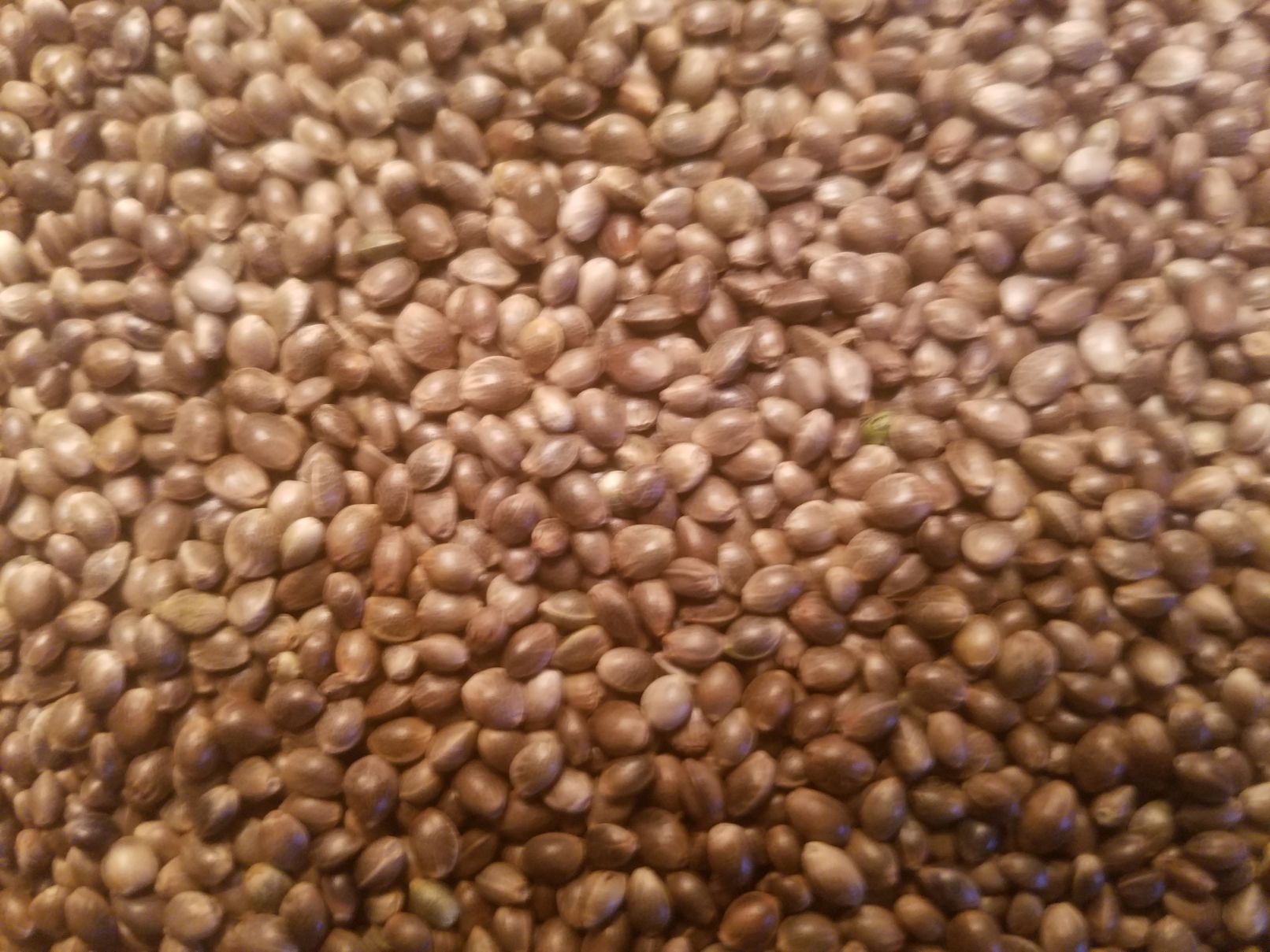 Why do I get a hot crop, from State approved seed?